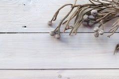 Λουλούδια του Μπρουνέι στο άσπρο ξύλινο υπόβαθρο Στοκ Εικόνα