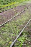 Λουλούδια του σιδηροδρόμου Στοκ εικόνα με δικαίωμα ελεύθερης χρήσης