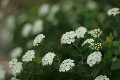 Λουλούδια του τομέα Στοκ φωτογραφία με δικαίωμα ελεύθερης χρήσης