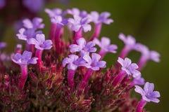 Λουλούδια του φθινοπώρου Στοκ φωτογραφία με δικαίωμα ελεύθερης χρήσης