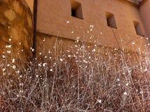 Λουλούδια του Castle Στοκ εικόνα με δικαίωμα ελεύθερης χρήσης