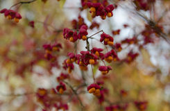 Λουλούδια των Βερσαλλιών Στοκ φωτογραφία με δικαίωμα ελεύθερης χρήσης