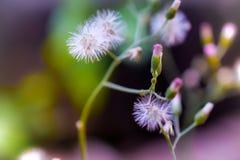 Λουλούδια των ονείρων Στοκ Εικόνα