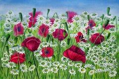 Λουλούδια των παπαρουνών και των μαργαριτών σε ένα λιβάδι - ζωγραφική watercolor Στοκ φωτογραφίες με δικαίωμα ελεύθερης χρήσης