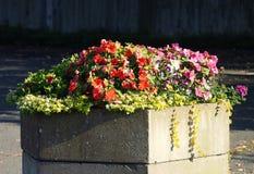 Λουλούδια υπαίθριων σταθμών αυτοκινήτων Στοκ φωτογραφία με δικαίωμα ελεύθερης χρήσης