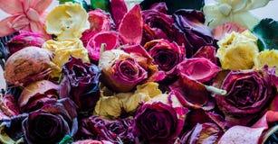 Λουλούδια υποβάθρου Στοκ εικόνες με δικαίωμα ελεύθερης χρήσης