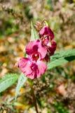 Λουλούδια φθινοπώρου στο πάρκο στην ηλιόλουστη ημέρα Στοκ Φωτογραφίες