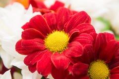 Λουλούδια φύσης τοπίων Στοκ Φωτογραφίες