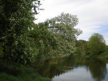 Λουλούδια Φύση Ποταμός ευημερία επιτυχία Τα ανθίζοντας δέντρα Άνοιξη ανθίζοντας κήποι στον καλό καιρό Κεράσι Στοκ φωτογραφία με δικαίωμα ελεύθερης χρήσης