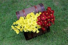 Λουλούδια χρυσάνθεμων στο στήθος θησαυρών Στοκ Φωτογραφία
