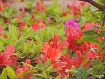 Λουλούδια χρώματος σολομών Στοκ εικόνα με δικαίωμα ελεύθερης χρήσης