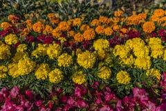 Λουλούδια χρώματος στο τετράγωνο στην πόλη Kezmarok Στοκ Φωτογραφία