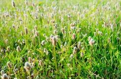 Λουλούδια χλόης Στοκ φωτογραφίες με δικαίωμα ελεύθερης χρήσης