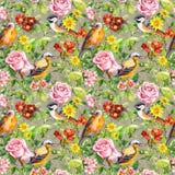 Λουλούδια, χλόη λιβαδιών, πουλιά floral πρότυπο άνευ ραφής watercolor Στοκ Εικόνες