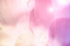 Λουλούδια λωτού χρώματος κρητιδογραφιών για το υπόβαθρο Στοκ Εικόνες