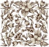 Λουλούδια. Όμορφο υπόβαθρο με λουλούδια. διανυσματική απεικόνιση