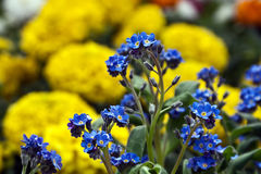 Λουλούδια 11 Στοκ φωτογραφία με δικαίωμα ελεύθερης χρήσης