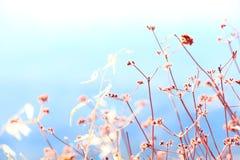 Λουλούδια Στοκ εικόνες με δικαίωμα ελεύθερης χρήσης