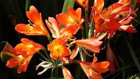Λουλούδια απόθεμα βίντεο