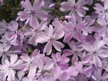 Λουλούδια Στοκ Εικόνες