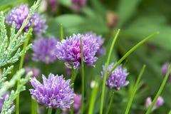Λουλούδια Στοκ εικόνα με δικαίωμα ελεύθερης χρήσης