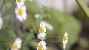 Λουλούδια φιλμ μικρού μήκους