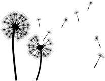 Λουλούδια Στοκ Εικόνα