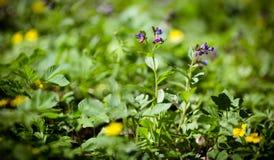 Λουλούδια Στοκ φωτογραφία με δικαίωμα ελεύθερης χρήσης