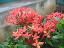 Λουλούδια 1 Στοκ φωτογραφία με δικαίωμα ελεύθερης χρήσης