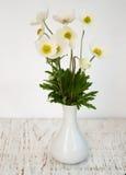 Λουλούδια Anemone άνοιξη Στοκ Εικόνα