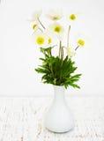 Λουλούδια Anemone άνοιξη Στοκ φωτογραφίες με δικαίωμα ελεύθερης χρήσης