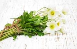 Λουλούδια Anemone άνοιξη Στοκ φωτογραφία με δικαίωμα ελεύθερης χρήσης