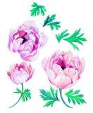 Λουλούδια Anemone διανυσματική απεικόνιση