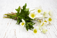 Λουλούδια Anemone Στοκ εικόνες με δικαίωμα ελεύθερης χρήσης