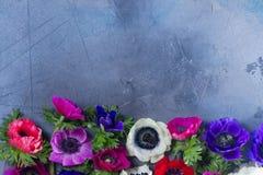 Λουλούδια Anemones στο υπόβαθρο πετρών Στοκ εικόνες με δικαίωμα ελεύθερης χρήσης