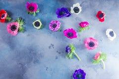 Λουλούδια Anemones στο υπόβαθρο πετρών Στοκ φωτογραφία με δικαίωμα ελεύθερης χρήσης