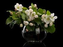 Λουλούδια Apple-δέντρων στο βάζο γυαλιού Στοκ εικόνες με δικαίωμα ελεύθερης χρήσης