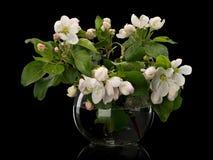 Λουλούδια Apple-δέντρων στο βάζο γυαλιού Στοκ φωτογραφία με δικαίωμα ελεύθερης χρήσης