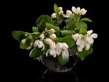 Λουλούδια Apple-δέντρων στο βάζο γυαλιού Στοκ Φωτογραφία