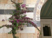 Λουλούδια Bougainvillea στο παλαιό συριακό κτήριο στοκ εικόνα