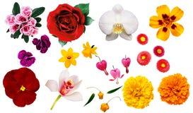 Λουλούδια Clipart Στοκ Εικόνες