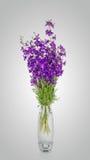 Λουλούδια Cornflowers σε ένα βάζο Στοκ Εικόνες