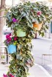 Λουλούδια Cyclamen για τη διακόσμηση οδών στοκ φωτογραφίες με δικαίωμα ελεύθερης χρήσης
