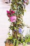 Λουλούδια Cyclamen για τη διακόσμηση οδών στοκ φωτογραφίες