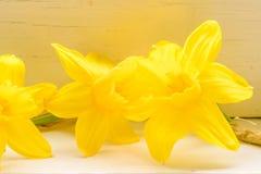 Λουλούδια Daffodil στο εσωτερικό περιβάλλον Στοκ φωτογραφία με δικαίωμα ελεύθερης χρήσης