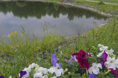 Λουλούδια Elicate ενάντια στο σκηνικό μιας μικρής λίμνης 2 Στοκ Εικόνες