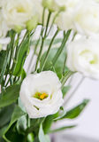 Λουλούδια Eustoma Στοκ φωτογραφία με δικαίωμα ελεύθερης χρήσης