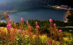 Λουλούδια Fireweed Στοκ εικόνες με δικαίωμα ελεύθερης χρήσης