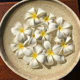 Λουλούδια Frangipani σε ένα κύπελλο Στοκ εικόνα με δικαίωμα ελεύθερης χρήσης