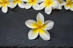 Λουλούδια Frangipani στο υπόβαθρο πετρών Στοκ εικόνα με δικαίωμα ελεύθερης χρήσης
